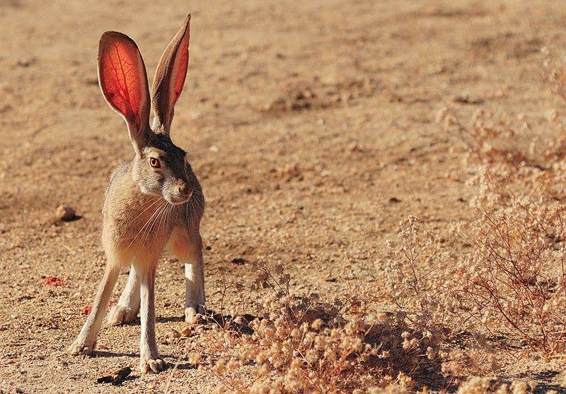 https://50mm.ru/images/animals_foto_6/54_animals_foto.jpg