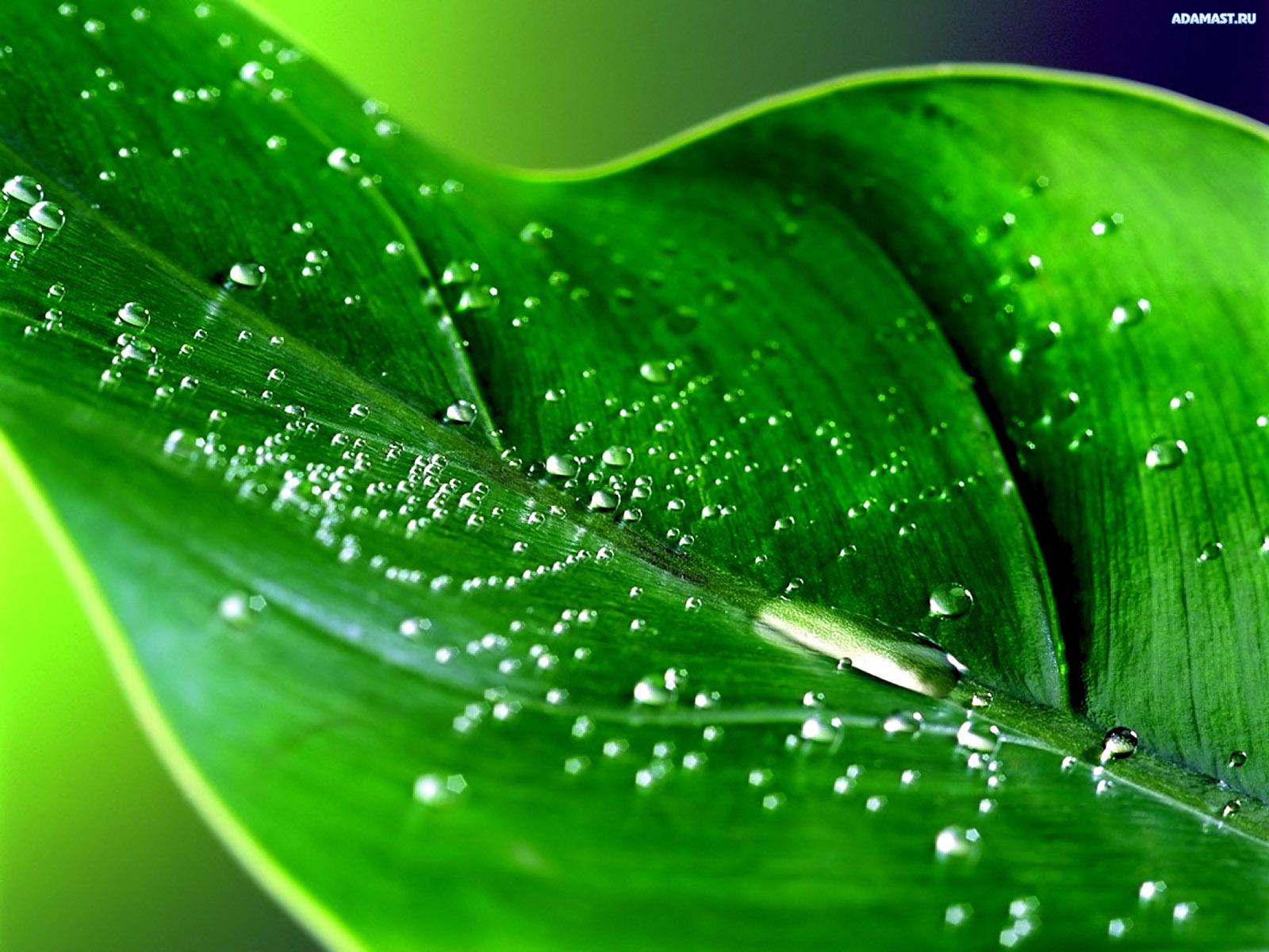 Зеленые  фотографии