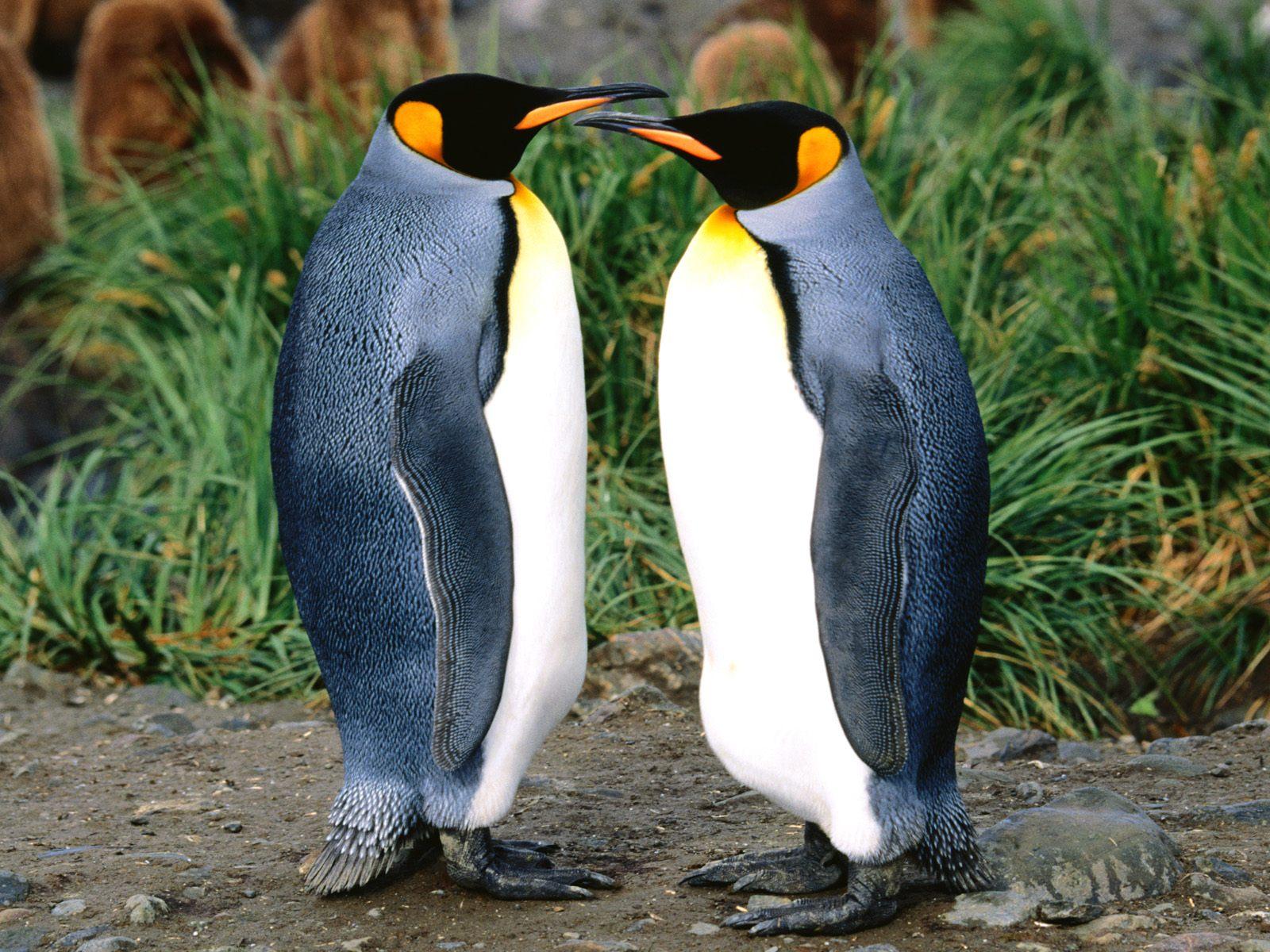 Картинка с пингвинами, хороших выходных картинки