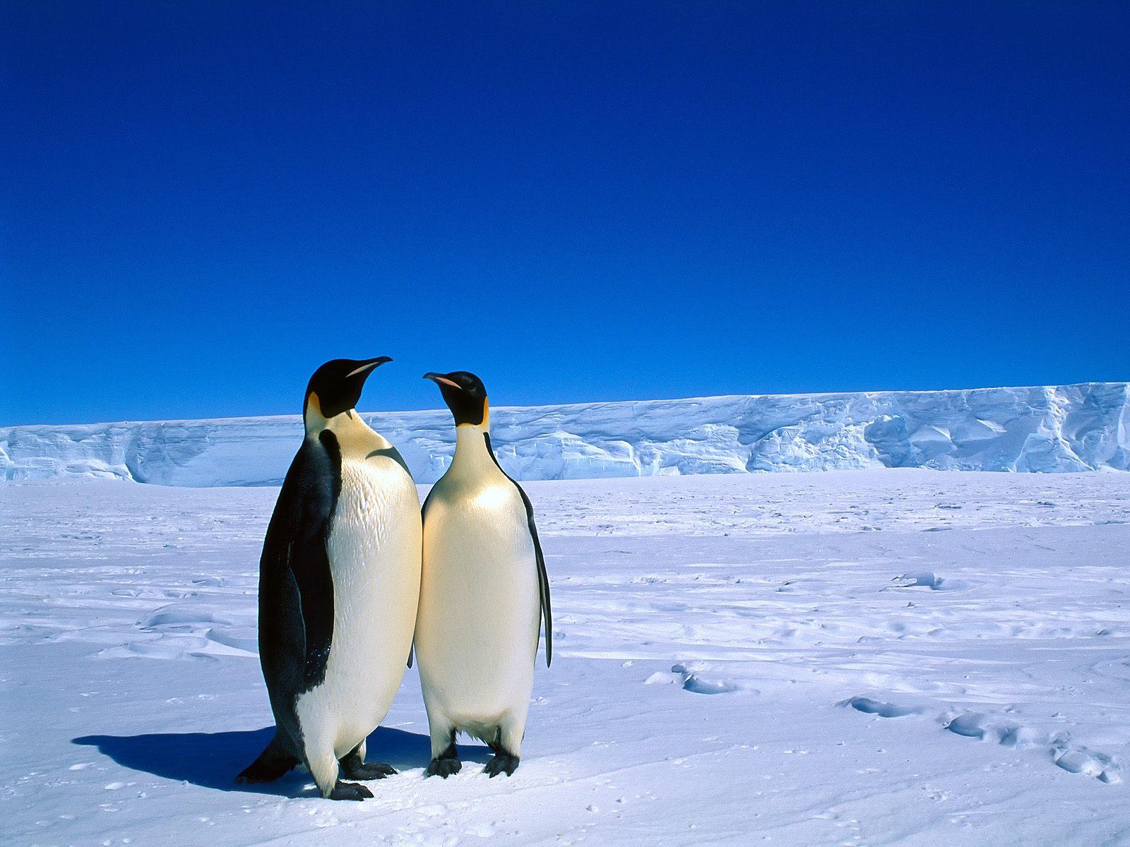 Fotos concentracion pinguinos 2012 65