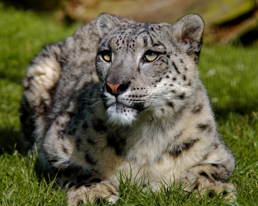 того, для фото самых красивых хищных животных зря ведь зеркальные