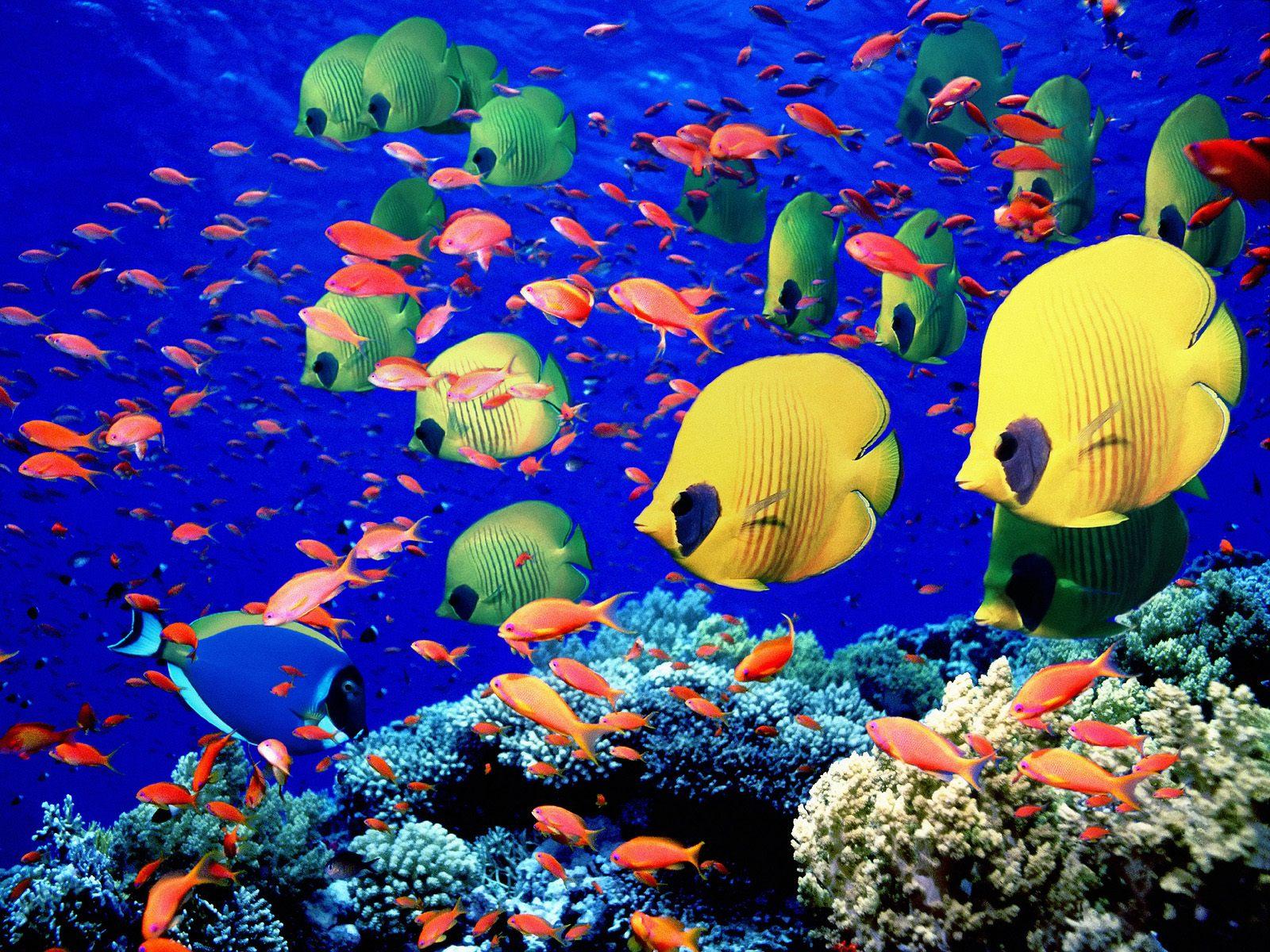верх охлажденного картинки подводный мир океана руки очень